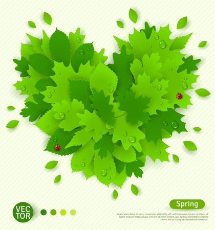dew drop: Spring design with green leaves formed heart. I love spring concept. Vector illustration. Place for your text message. Water drops and lady bugs. Dew on leaves.