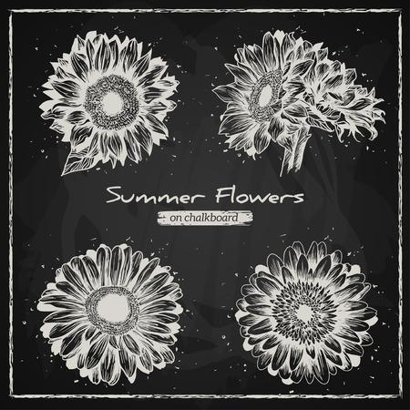 girasol: Fondo floral con estilo, dibujado a mano las flores retro, gerbera y girasol. Estilo de tiza, la pizarra de fondo. Ilustración del vector.