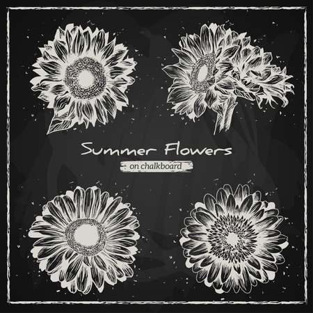 sunflower: Stylish floral background, hand drawn retro flowers, gerbera and sunflower. Chalk style, Chalkboard background. Vector illustration.