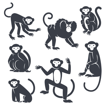 monkey silhouette: Black Monkeys Silhouettes Isolated on White. Vector illustration. Symbols of 2016 Chinese New Year.