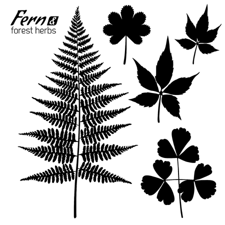 Leaves Silhouettes Isolated on White. Vector illustration. Fern Branch, Oxalis leaf, Wild Grape Leaves, Forest Herbs.