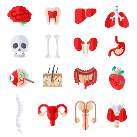 Human Internal Organs Flat Icons Set. Vector illustration. Skull and bones, liver and kidney, stomach, eye anatomy, skin with hair, heart, man and woman reproductive system, spine, healthy tooth.