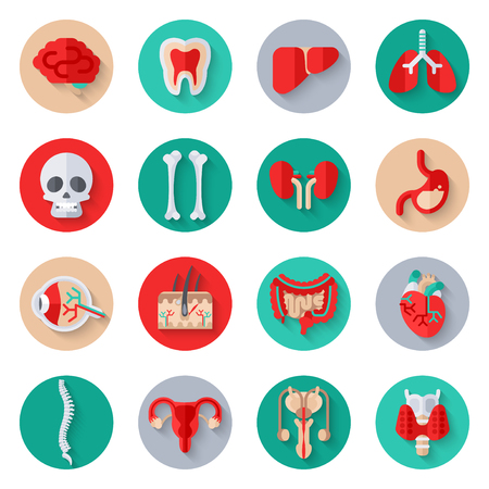 ileum: Human Internal Organs Flat Icons on Circles Set.