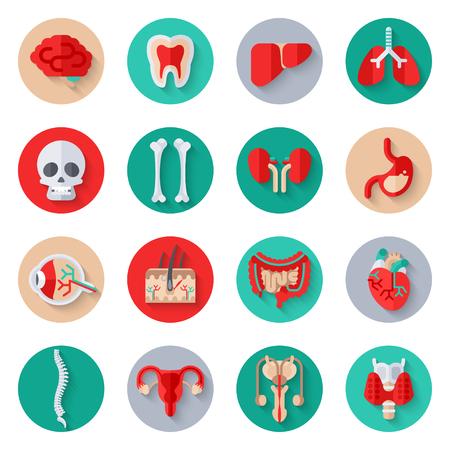 Rganos humanos internos planas Iconos en círculos Conjunto. Foto de archivo - 56482327