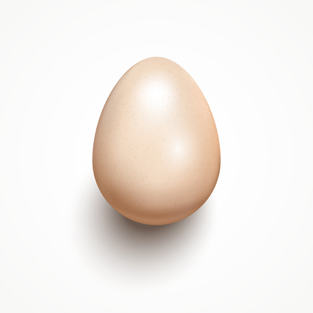 testicle: Glossy realistic egg isolated on white background with shadow. Vector illustration. Illustration