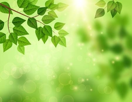 Bosachtergrond met zonlicht door bladeren.