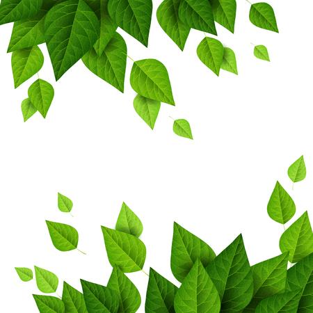feuille arbre: Frontières avec des feuilles vertes