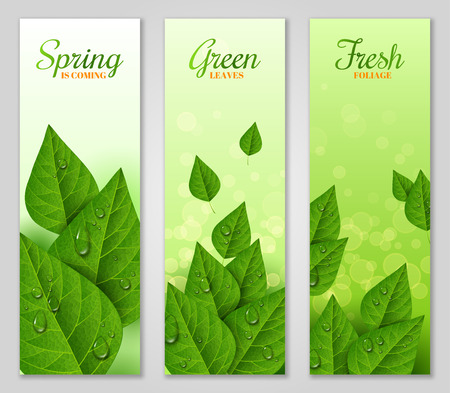 wet leaf: Vertical banners with green leaves Illustration