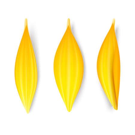 Yellow petals set 矢量图像