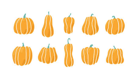Pumpkins of different shapes. Hand drawn vector illustration on white background Иллюстрация