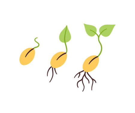 Seeds and seedlings. Germination of sprouts in doodle style. Hand drawn isolated vector illustration on white background