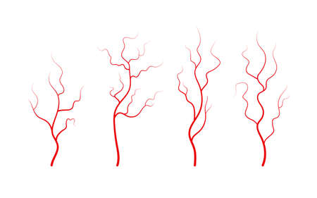 Set of human veins and arteries. Red branching blood vessels and capillaries. Vector illustration isolated on white background. Vector Illustration