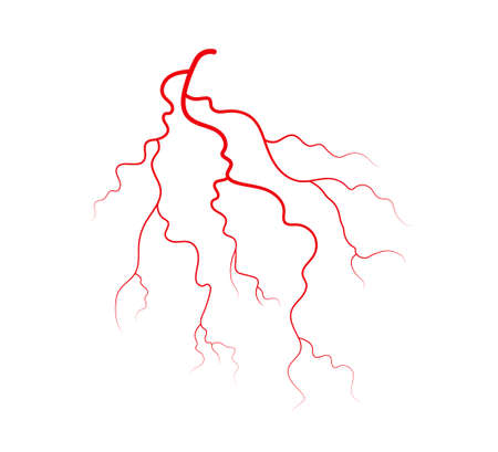 Human veins and arteries. Red branching blood vessels and capillaries. Vector illustration isolated on white background.