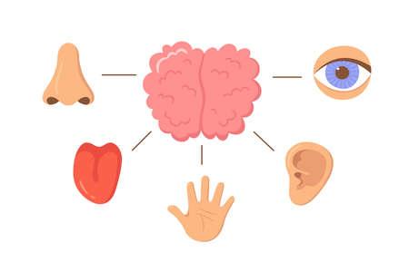 Brain and human senses organ set. Nose, ear, hand, tongue, eye. Sensory organs. See, hear, feel, smell and taste. Elements for an educational manual. Vecor illustrations isolated on white background. Illusztráció