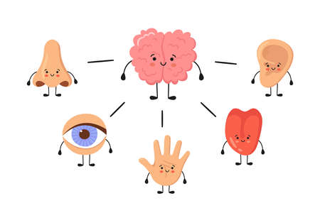 Brain and five human senses organs kawaii characters. Nose, ear, hand, tongue and eye. Cute sensory organs. See, hear, feel, smell and taste. Vector illustrations isolated on white background.