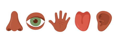 Five human senses organ set. African americans. Nose, ear, hand, tongue, eye. Sensory organs set. See, hear, feel, smell and taste. Vecor illustrations isolated on white background.