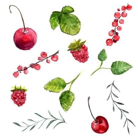 水彩ベリー: チェリー、赤いスグリ、ラズベリー、ミント、ローズマリーの葉。白い背景上に分離されてベクトル デザイン要素です。