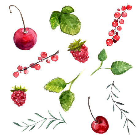 Watercolor berries: cherry, red currant and raspberry, leaves of mint and rosemary. Vector design elements isolated on white background. Illustration