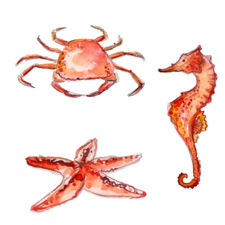 Hand getekende aquarel zeedieren: oranje krabben, zeesterren en zee-paard. Kleurrijke vector illustraties op een witte achtergrond.