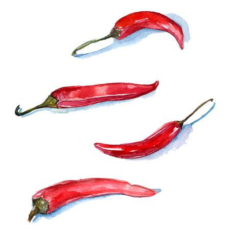 손으로 그린 수채화 빨간색 칠리 고추. 벡터 음식 그림. 일러스트
