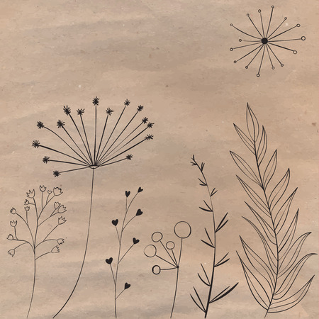 umbel: Plants and branches on the brown craft paper. Vector design elements for natural products design. Illustration