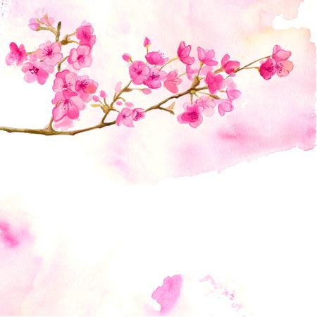 flor de sakura: Fondo rosado con rama de flor de cerezo. Vector ilustración de la acuarela sakura.