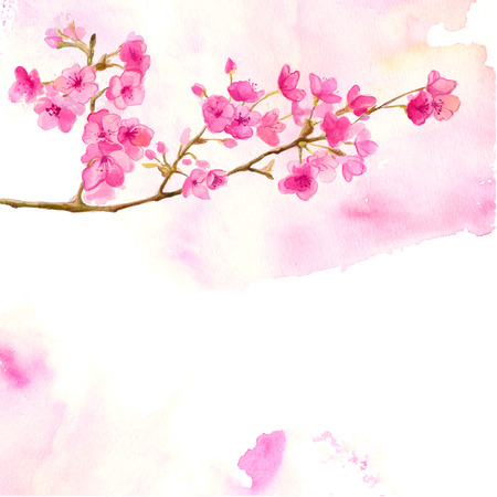 Pink background with branch of cherry blossom. Vector watercolor illustration of sakura. Vettoriali