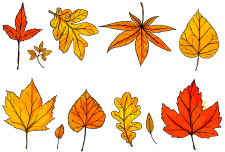 Autumn leaves isolated on white background. Hand drawn orange and red vector leaf. Design elements for fall special offers, cards Ilustração