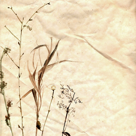 Watercolor herbarium hand drawn on the old paper.  plants and branches Stock Photo