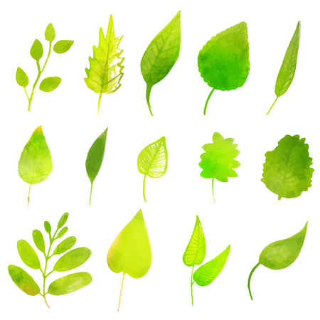 macros: Green vector leaves isolated on white background. Colorful design elements. Illustration
