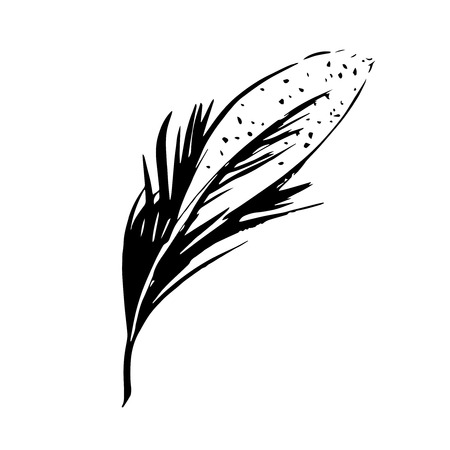 inscribe: Hand drawn bird feather, Symbol of knowledge, writing and learning. Vector black and white illustration in vintage style isolated on white background