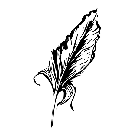 endorse: Hand drawn bird feather, Symbol of knowledge, writing and learning. Vector black and white illustration in vintage style isolated on white background