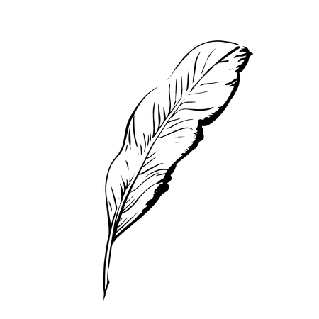 endorse: Handdrawn bird feather, Symbol of knowledge, writing and learning. Vector black and white illustration in vintage style isolated on white background Illustration