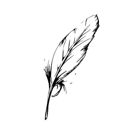 Hand getrokken vogel veer, Symbool van kennis, schrijven en leren. Vector zwart-wit afbeelding in vintage stijl op een witte achtergrond Stock Illustratie