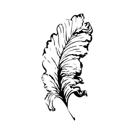 scribe: Hand drawn bird feather, Symbol of knowledge, writing and learning. Vector black and white illustration in vintage style isolated on white background