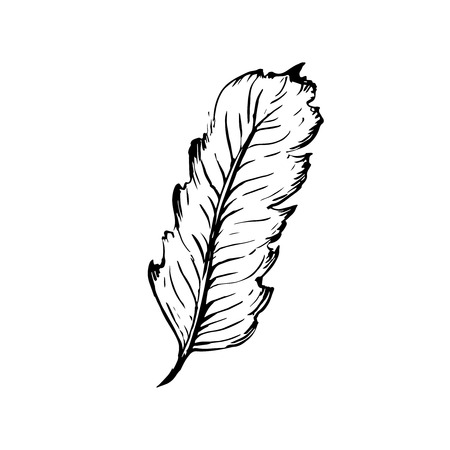 author: Hand drawn bird feather, Symbol of knowledge, writing and learning. Vector black and white illustration in vintage style isolated on white background