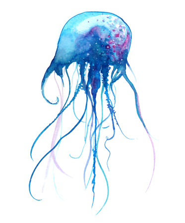 nettle: Jellyfish watercolor illustration. Painted medusa isolated on white background, underwater wildlife Stock Photo