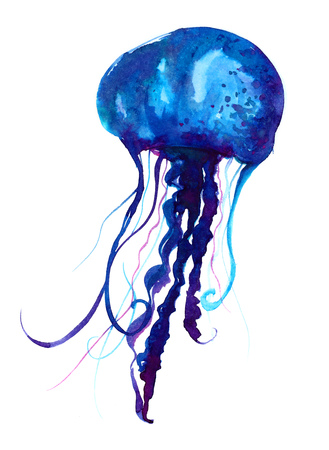 jelly fish: Jellyfish watercolor illustration. Painted medusa isolated on white background, underwater wildlife Stock Photo