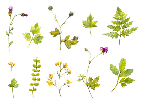 Set of watercolor plants and branches, fern and wild flowers. Isolated nature illustrations. Stock Photo