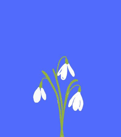 A bunch of three snowdrops flowers. White florals had drawn on blue bcakground. Spring simbol illustration