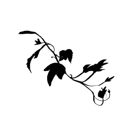 Ornate ink illustration of ivy branch. Tattoo design concept. Black stem silhouette isolated on white background.