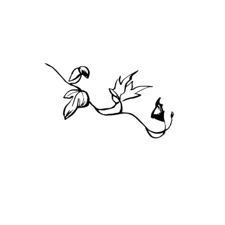 Ornate ink illustration of ivy branch. Tattoo design concept. Black stem outline drawing with veins isolated on white background.