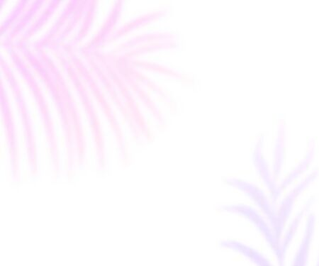 Tropic palm leaves shadows overlay on white empty background. Purple gradient blurred silhouettes of plants