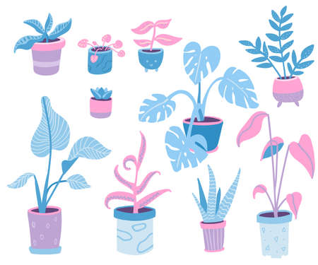 Home plants collection, doodle illustrations of popular indoor potted plants. Different pots and leaves. Cozy interior. Blue and pink vector illustration.
