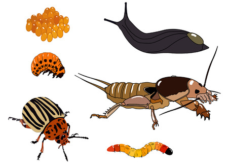 antenna dragonfly: potato beetle pests.Set of vector elements