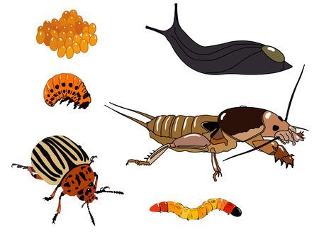 exoskeleton: potato beetle pests.Set of vector elements