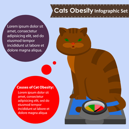 cat obesity,common problem pets.vector illustration