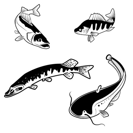 Set of the river fish in vector. Fish logo design templates Illustration