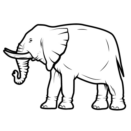 standing on white background: vector illustration of  elephant isolated on white background Illustration
