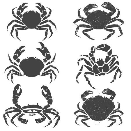 cangrejo caricatura: Conjunto de los cangrejos. Etiqueta o plantilla de diseño del emblema. Mariscos. Ilustración del vector.